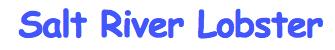 * Salt River Lobster